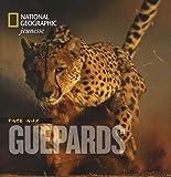 Face aux guépards