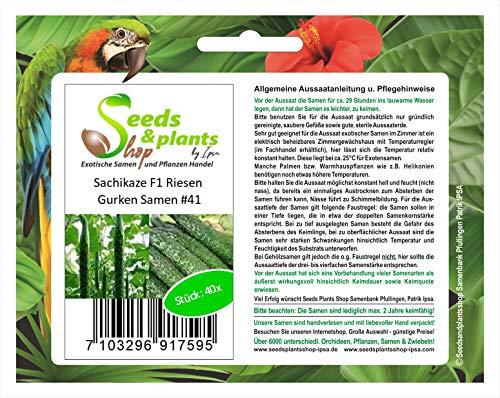 Stk - 40x Sachikaze Riesen Gurken Gemüse Pflanzen - Samen #41 - Seeds Plants Shop Samenbank Pfullingen Patrik Ipsa