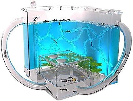 NHY Hábitat de la Granja de Hormigas para niños, ecosistema en Laberinto 3D de Gel translúcido, Permite el Estudio del Comportamiento de Las Hormigas y la Estructura Social,