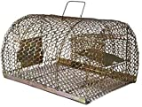 Wisdom India Wisdom Rat Trap Iron Trap/Cage for Catching Rat/Mouse/Rodent/Chipmunk/Squirrels, Humane(No Kill), Big Size & Durable