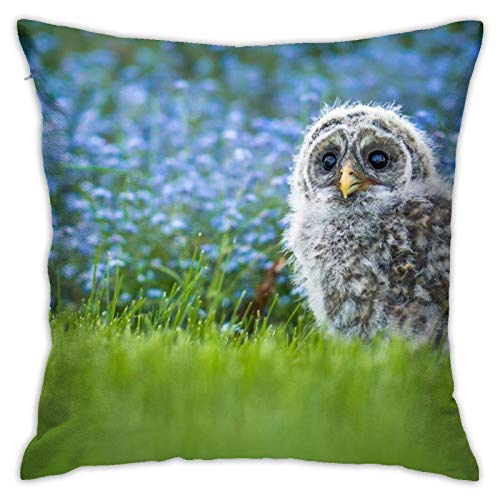 Affordable shop Funda de almohada decorativa para el hogar, diseño de búho, pájaro, pollito, flores, hierba y bokeh, para regalo, hogar, sofá, cama, coche, 45,7 x 45,7 cm