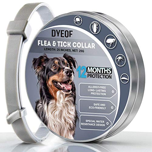DYEOF Dog Collar, 12 Months Collar for Dog, Long Validity Dog Collar, Natural and Water-Resistant Collar for Dogs