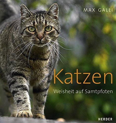 Katzen: Weisheit auf Samtpfoten...