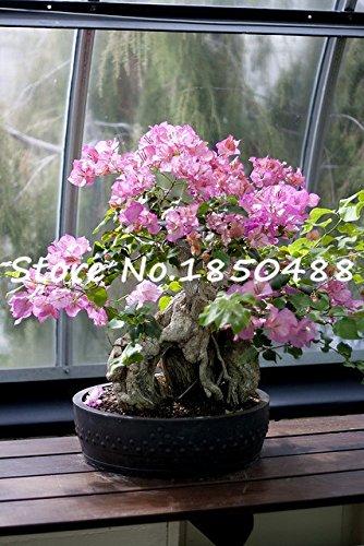 Couleurs Ampoules Tulip, Ball Tulip Graines de vente Hot Bonsai Flower Pot Plante boule Mix bricolage jardin