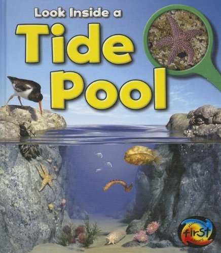 Look Inside a Tide Pool