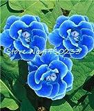 GEOPONICS SEEDS: Hot 100 PC Gloxinie Bonsai Blume Sinningia speciosa Bonsai Pflanze Balkon Blume für Hausgarten-Dekoration: i