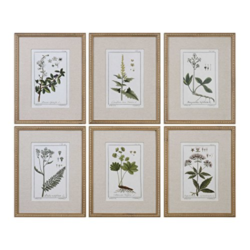 """Uttermost Green Floral Botanical Study 6-Piece 22 3/4"""" H Wall Art Set"""