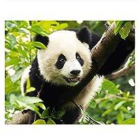 キットによる絵画 塗り絵 手塗 子供 DIY絵 デジタル油絵 動物パンダ-40x50cm (diyの木製フレーム)