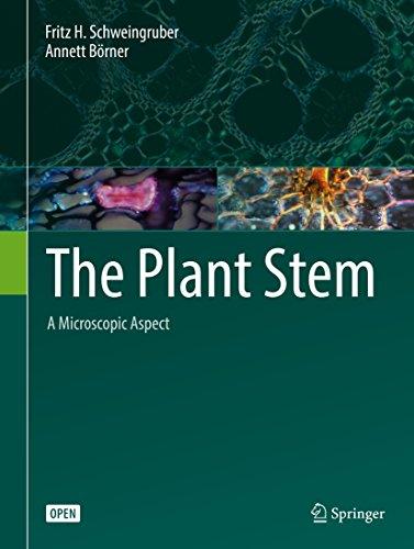 The Plant Stem: A Microscopic Aspect (English Edition)