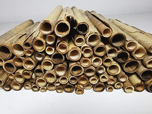 aktiongruen Schilfröhrchen Wildbienenhotel Insektenhotel Bastelsachen (100 Stück) 12cm