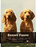 Basset Fauve: Choose best dog breeds for you (English Edition)