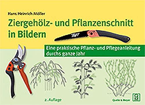 Quelle  Meyer Ziergehölz Bild