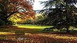 QIAOYUE Pintura por número para Adultos y niños Pintura Sala de Estar Dormitorio Cocina decoración Lienzo 40X50Cm (sin Marco) - Silla de otoño del Parque Luxemburgo