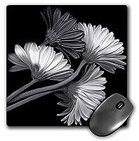 3drose LLC 8x 8x 0.25インチマウスパッド、ブラックとホワイト芸術的イメージのデイジー花against aブラック背景( MP _ 154749_ 1)