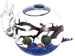 Mini Ecosystem Aquatic Aquarium Kit - Cute Snail Glass Vase, Living 2 Marimo Moss Balls Lapis Lazuli Small Stones Black Fan Coral Colorful Shell