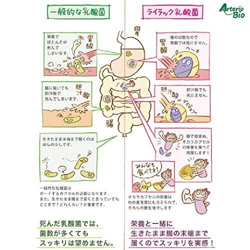 『ライラック 乳酸菌 スタンダード (カプセル) [ 機能性表示食品 ] (31粒 / 約1ヶ月分) 乳酸菌 サプリメント』の4枚目の画像