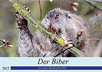 Der Biber, ein guter Bauhandwerker (Wandkalender 2022 DIN A2 quer): Ein schoene Begegnung mit einem, der nur nachts unterwegs ist. (Monatskalender, 14 Seiten )