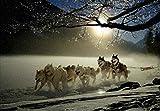 NO BRAND Conradsha - 1000 Piezas Puzzle - Husky Siberiano compite en la Nieve en Invierno - Rompecabezas para niños Adultos Juego Creativo Rompecabezas Navidad decoración del hogar Regalo