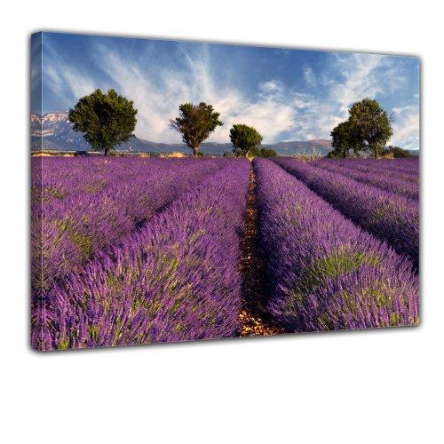 Bilderdepot24 Bild auf Leinwand   Lavendelfeld in der Provence - Frankreich in 60x50 cm als Wandbild   Wand-deko Dekoration Wohnung modern Bilder   170038B