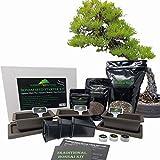 Traditional Bonsai Seed Growing Kit - Japanese Wisteria, Japanese Black Pine, Dawn Redwood (Level 2)