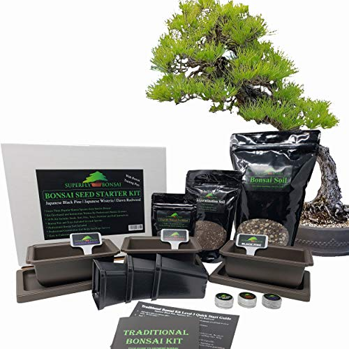 Premium Bonsai Tree Starter Seed Growing Kit - Japanese Black Pine, Japanese Wisteria, Dawn Redwood - Includes Bonsai Training Pots & Trays, Bonsai Soil, Fertilizer
