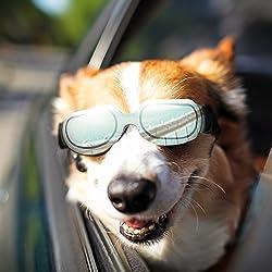 Beste Hundebrille - Augenschutz oder Verbesserung der Sehkraft