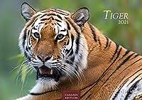 Tiger 2021 - Format S