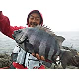 三重県梅雨の石鯛釣り