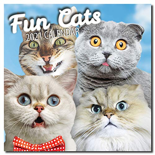 Fun Cats 2021 - Calendario de pared para gatos