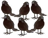 Prextex Halloween Black Feathered Small Crows – 6 Pc Black Birds Ravens Props Décor Halloween Decorations Birds