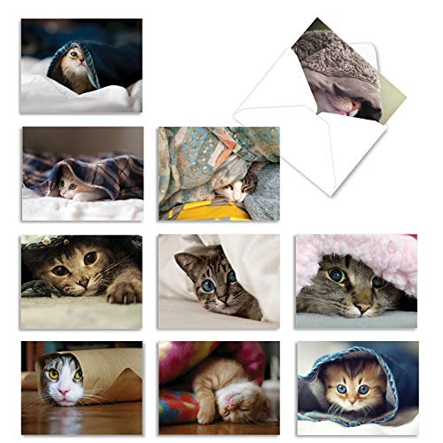 The Best Card Company - 10 All Occasion Blank Cat Cards (4 x 5.12 Inch) - Cute Assorted Bulk Card Set - Cat You See Me Now M1543BN