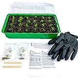 KliKil Kit huerto Urbano de Plantas Naturales con 1 semillero, Guantes, 2 paletas de Madera, Dos Semillas aromaticas ecológicas seleccionadas, no OGM, de Perejil y Orégano
