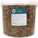 algova Mealworms dried - Alimento natural de insectos para peces ornamentales, aves ornamentales, tortugas, erizos (10L = 1700g)
