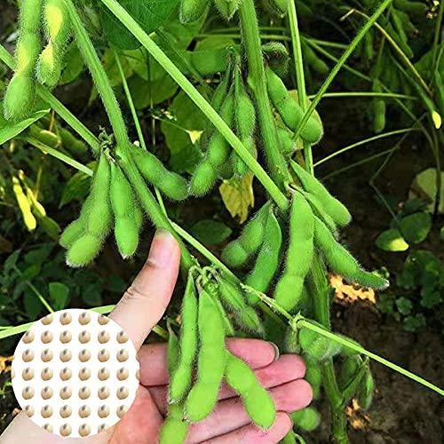C-LARSS 100Pcs / Bag Semillas De Hortalizas, Semillas De Jardín Verde De Alta Germinación Productivas De Rápido Crecimiento Para Exteriores Semillas