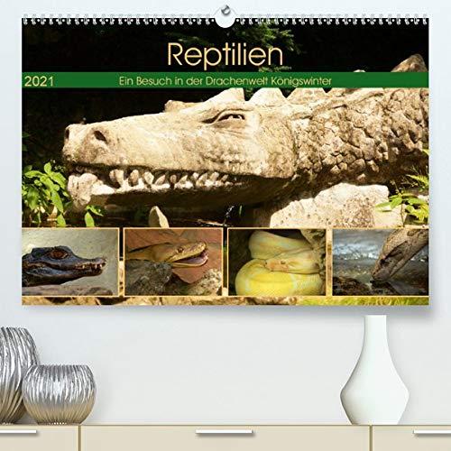 Reptilien. Ein Besuch in der Drachenwelt Königswinter (Premium, hochwertiger DIN A2 Wandkalender 2021, Kunstdruck in Hochglanz): Faszinierende ... (Monatskalender, 14 Seiten ) (CALVENDO Tiere)
