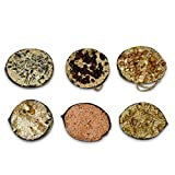 REPEAK Coconut Bird Feeder Halves, Pack of 6 Different Flavours Including Suet, Sunflower Seed, Berries, Peanuts, Raisins and Mealworms - Wild Bird Food for Hanging Outdoors, Feeders for Garden <span class='highlight'><span class='highlight'>Birds</span></span>
