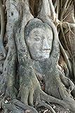 Seedeo Bodhi Tree/Buddha Baum (Ficus religiosa) 100 Samen