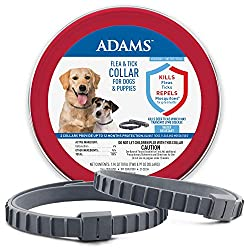 in budget affordable Two Adam collars against fleas and ticks on dogs and puppies.