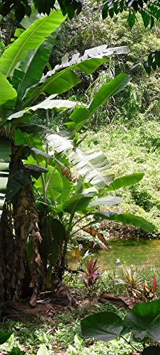 Bilderdepot24 Türtapete selbstklebend | Bananenbaum im Dschungel | in 90x200 cm | einteilig Türaufkleber Türfolie Türposter | Wand-deko Dekoration Wohnung | TF60427a