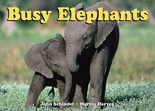 Busy Elephants (A Busy Book)