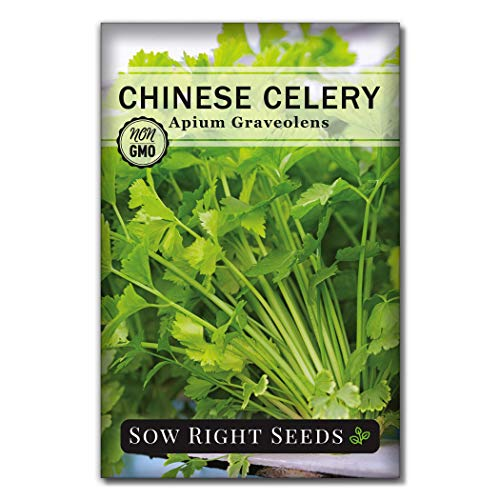 Sow Right Seeds - Chinese Celery Seeds for Planting; 400 Non-GMO Heirloom Seeds per Packet with Instructions to Plant and Grow a Kitchen Herb Garden, Indoors or Outdoor; Gardening Gift