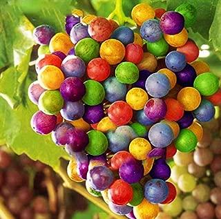 AtFipan 50Pcs/Pack Grape Seeds Rainbow Colorful Garden Fruit Plants Sweet Kyoho Grape Seeds