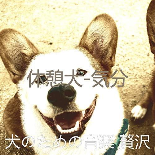 犬のための音楽 贅沢