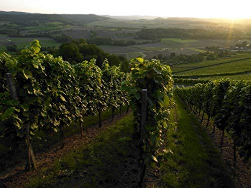 Wuerttemberger-Wein-Trollinger-rose-SUeSS-FRUCHTIG-QW-suess-1-x-025-l