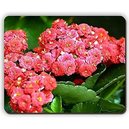 Mauspad, Kalanchoe Blumen, Kräuter, Zimmerpflanze, Spiele, Büro, 24 x 19,8 cm