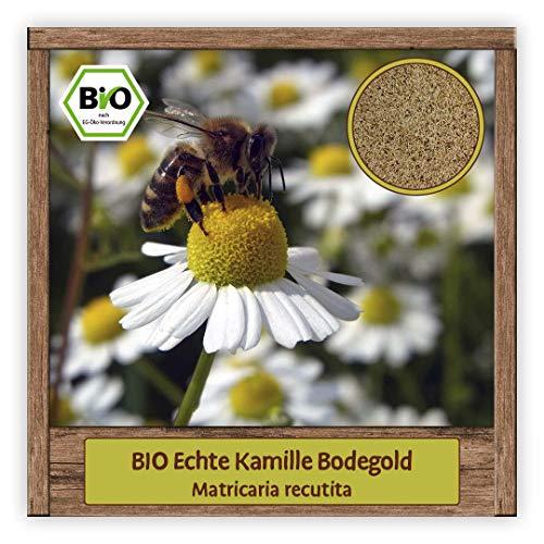 BIO Echte Kamille Samen Saatgut Kräutersamen Bienenweide Bodegold Blumensamen mit essbare Blüten