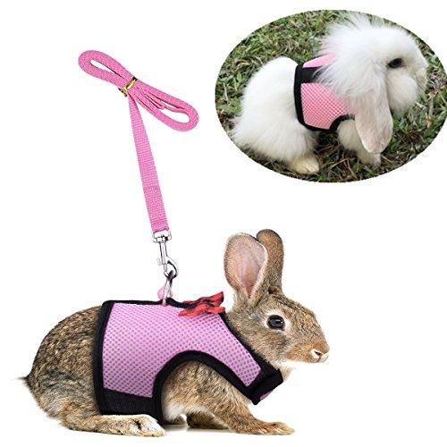 Ensemble de promenade réglable pour petit animal avec...