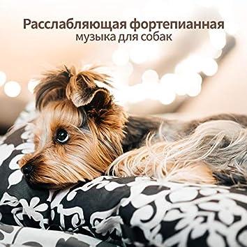 Расслабляющая фортепианная музыка для собак - Звуковая терапия, глубокое расслабление, анксиолитическое, спокойствие, счастливая собака