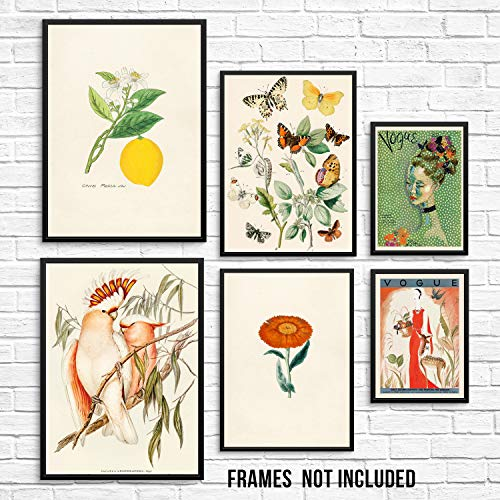 Sincerely, Not Vintage Art Prints - Set of 6 - Butterflies Birds Lemon Flower and Fashion Pictures - UNFRAMED - Trendy Home Decor Wall Posters for Living Room Kitchen Dining Room