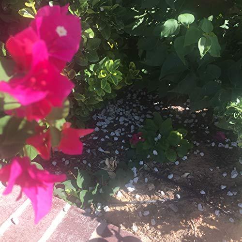 Gantessa Stone Gardening Pumice
